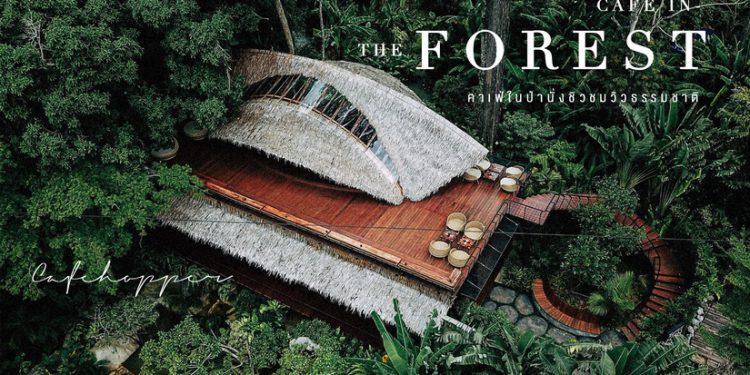 คาเฟ่ในป่า นั่งชิว ชมวิว ธรรมชาติ